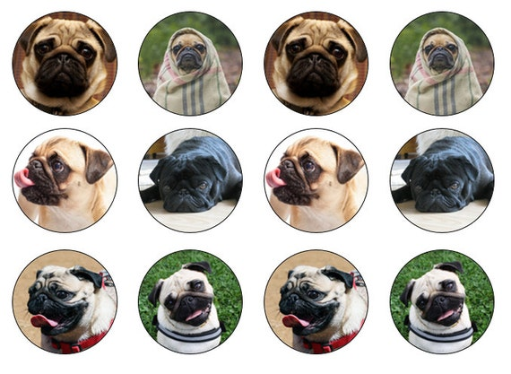 cute pugs dog puppy 24x edible stand up cup cake toppers wafer paper *precut