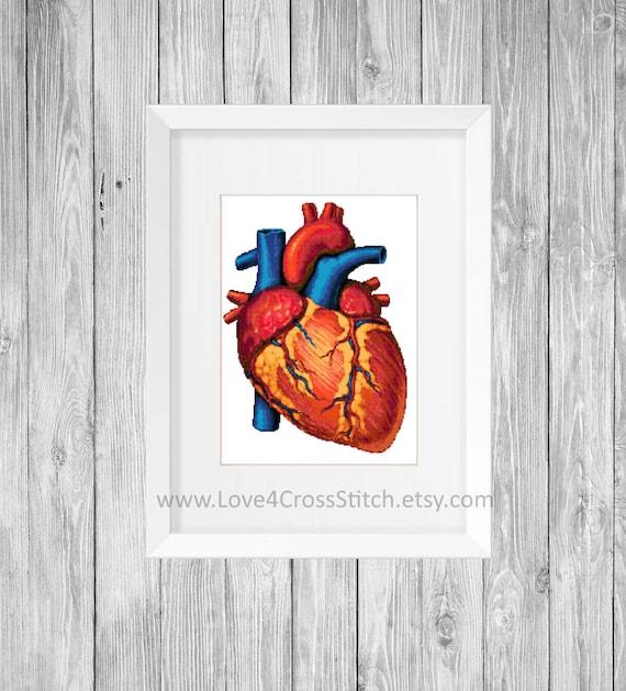 Human Heart Cross Stitch Pattern Modern Anatomy Cross Stitch Etsy