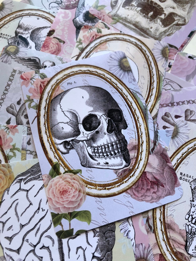 Skeleton stickers. Anatomical stickers of skulls and roses. image 0