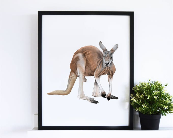 The Red Kangaroo // White Collection