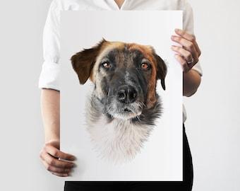 Colour Pet Commission