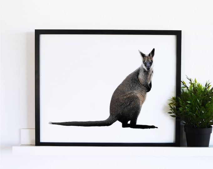 The Swamp Wallaby // White Collection