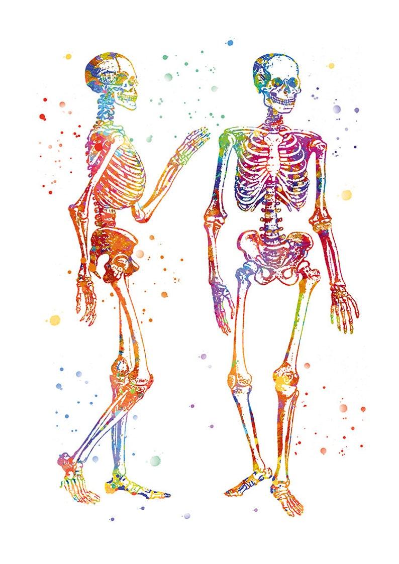 Peinture corps humain aquarelle anatomie dessin squelette ...