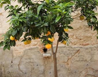 Family Owned Citrus & Fruit Tree Farm by LemonCitrusTree on Etsy