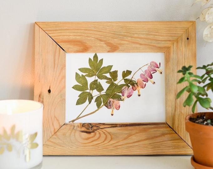 Bleeding heart | Print reproduction artwork of pressed flowers | 100% cotton rag paper | Botanical artwork