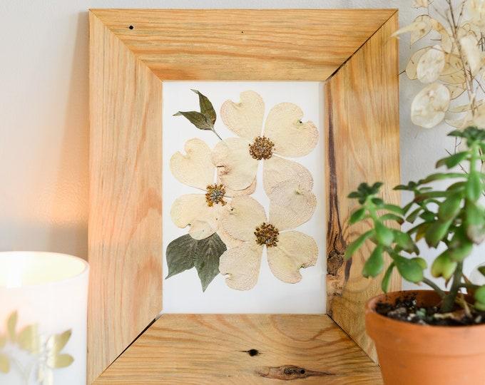 White Flowering Dogwood, VA , NC State Flower | Print reproduction artwork of pressed flowers | 100% cotton rag paper | Botanical artwork
