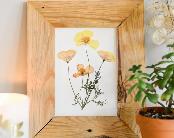 California Poppy, CA State Flower | Print reproduction artwork of pressed flowers | 100% cotton rag paper | Botanical artwork