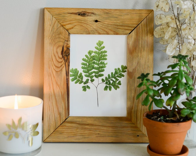 Maidenhair Fern | Print reproduction artwork of pressed plants | 100% cotton rag paper | Botanical artwork, Greenery
