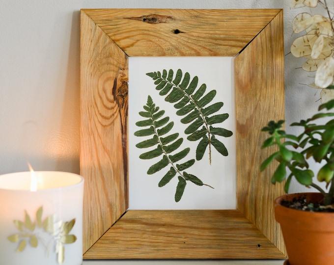 Christmas Fern | Print reproduction artwork of pressed plants | 100% cotton rag paper | Botanical artwork, Greenery