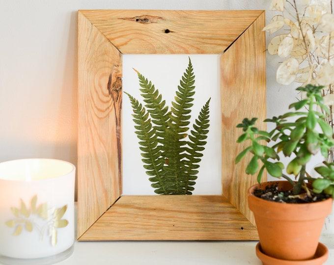Cinnamon Fern | Print reproduction artwork of pressed plants | 100% cotton rag paper | Botanical artwork, Greenery