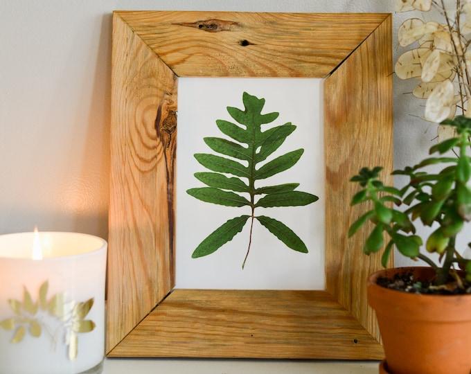 Sensitive Fern | Print reproduction artwork of pressed plants | 100% cotton rag paper | Botanical artwork, Greenery