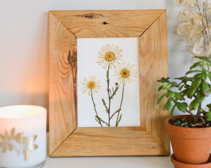 Daisy / April | Print artwork of pressed flowers | 100% cotton rag paper | Birth month flowers, Botanical artwork, herbarium