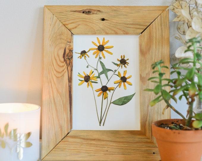 Black eyed susan/rudbeckia, Maryland State Flower   Print reproduction artwork of pressed flowers   100% cotton rag paper   Botanical art