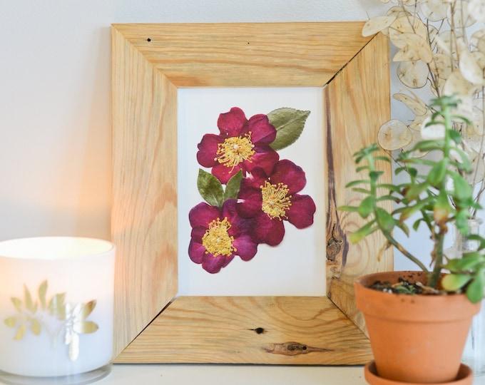 Pink Camellia, Alabama State Flower   Print reproduction artwork of pressed flowers   100% cotton rag paper   Botanical artwork   AL