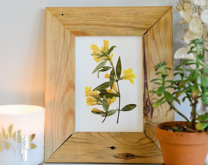 Yellow Jessamine, South Carolina State Flower   Print reproduction artwork of pressed flowers   100% cotton rag paper   Botanical artwork