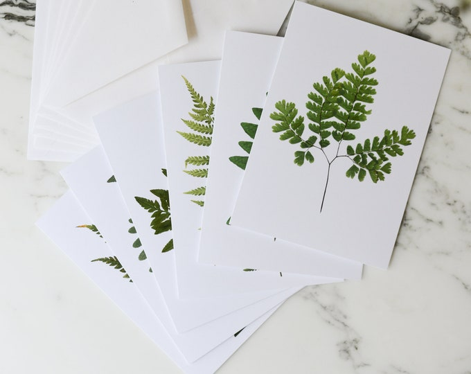 """Assorted Ferns   Blank Greeting Cards, set of six, with white linen envelopes   Print reproduction of pressed plants   4.5x6"""""""