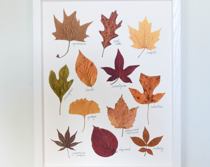 October Afternoon | Print artwork of pressed autumn leaves | 100% cotton rag paper | Botanical artwork