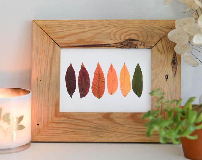 Sumac Spectrum | Print reproduction artwork of pressed autumn leaves | 100% cotton rag paper | Botanical artwork