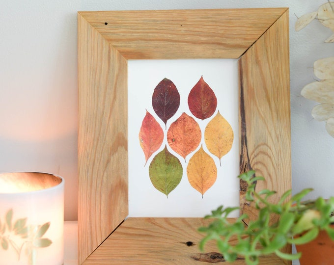 Dogwood Spectrum | Print reproduction artwork of pressed autumn leaves | 100% cotton rag paper | Botanical artwork