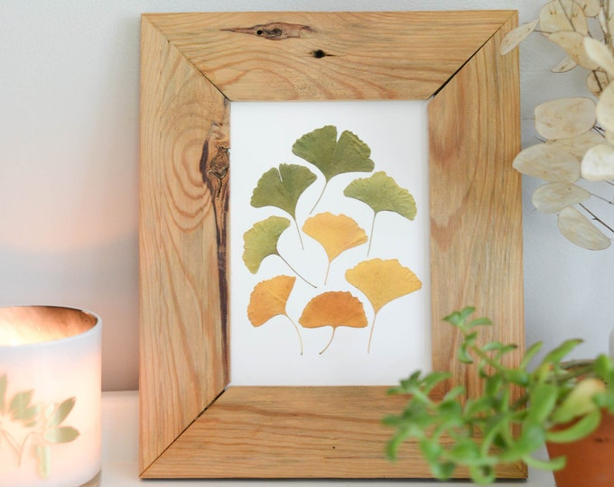 Ginkgo Spectrum | Print reproduction artwork of pressed autumn leaves | 100% cotton rag paper | Botanical artwork