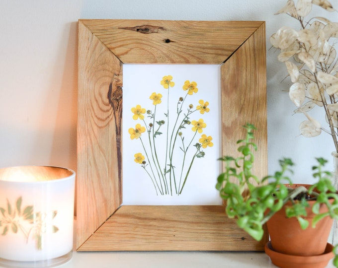 Buttercup, wild ranunculus | Print reproduction artwork of pressed flowers | 100% cotton rag paper | Botanical art
