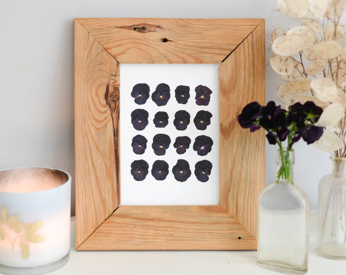 Black Viola blooms | Print reproduction artwork of pressed flowers | 100% cotton rag paper | Botanical artwork