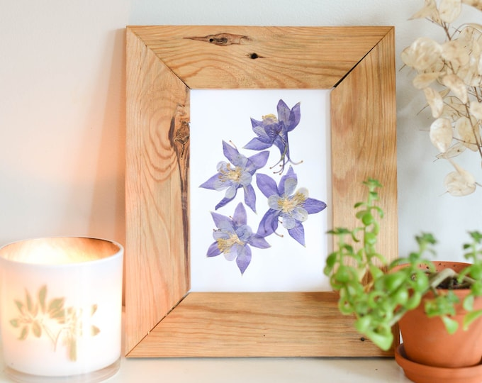 Columbine, Colorado State Flower | Print reproduction artwork of pressed flowers | 100% cotton rag paper | Botanical art