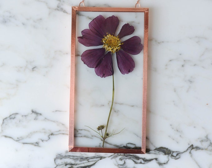"Real pressed flower wall hanging | cosmos | 3x6"" square glass with copper edging 