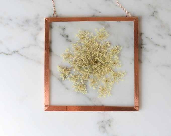 "Real pressed flower wall hanging | Queen Anne's Lace | 4"" square glass with copper edging"