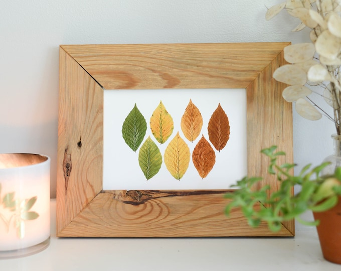 Beech Spectrum | Print reproduction artwork of pressed autumn leaves | 100% cotton rag paper | Botanical artwork