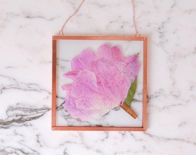 """Flower of the Month - June 2021   Real pressed flower wall hanging   pink peony   4"""" square glass with copper edging"""