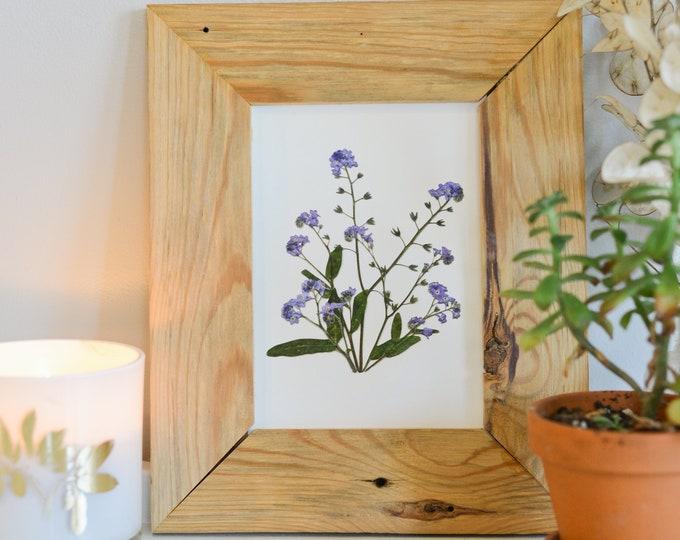 Forget-me-not, Alaska State Flower   Print reproduction artwork of pressed flowers   100% cotton rag paper   Botanical art