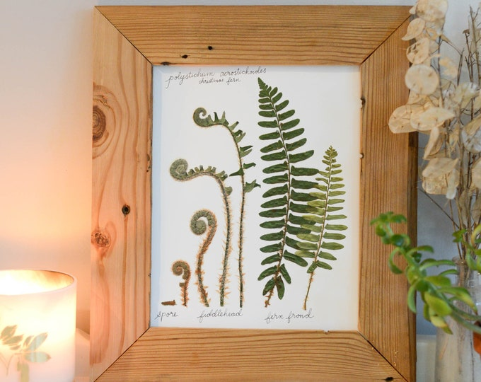 The Lifecycle Collection : Christmas Fern | Print reproduction artwork of pressed flowers | 100% cotton rag paper | Scientific art