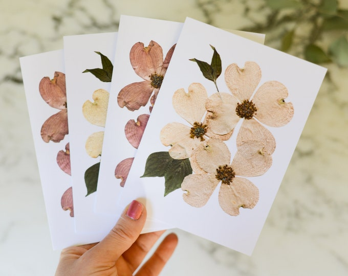 """Flowering Dogwood   Blank Greeting Cards, set of four, with white linen envelopes   Print reproduction of pressed flower designs   4.5x6"""""""