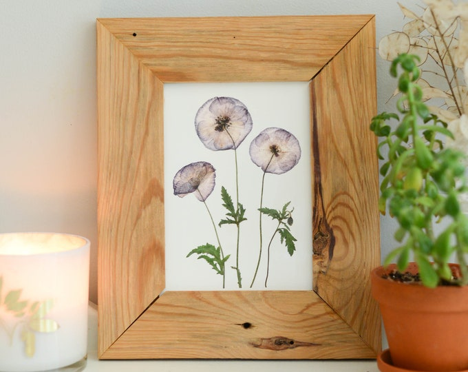 Amazing Grey - Shirley Poppy | Print artwork of pressed flowers | 100% cotton rag paper | Birth month flowers, Botanical artwork