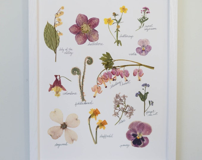 April Dawn | Print artwork of pressed spring flowers | 100% cotton rag paper | Botanical artwork