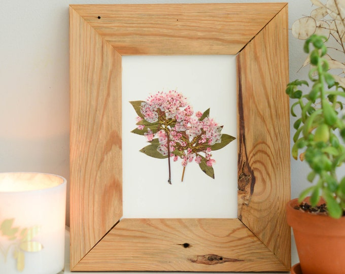 Mountain Laurel, PA, CT State Flower | Print reproduction artwork of pressed flowers | 100% cotton rag paper | Botanical artwork