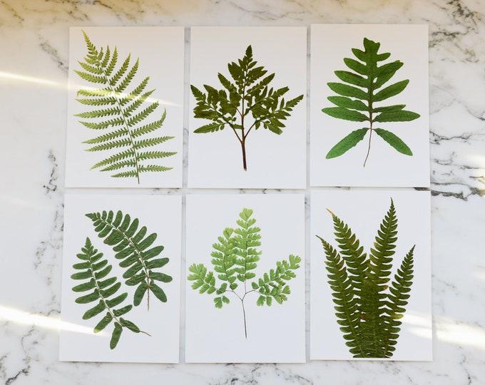 SET OF 6 | Print reproduction artworks of assorted pressed ferns | 100% cotton rag paper | Botanical artwork, Greenery