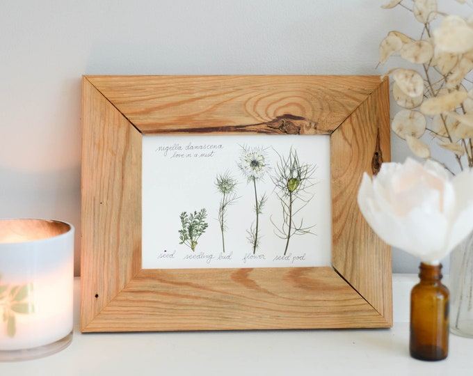 The Lifecycle Collection : Nigella | Print reproduction artwork of pressed flowers | 100% cotton rag paper | Scientific art