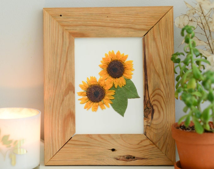 Sunflower, KS State Flower | Print reproduction artwork of pressed flowers | 100% cotton rag paper | Botanical artwork