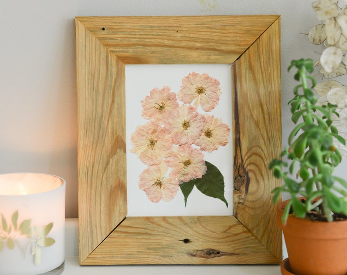 Pink Cherry Blossoms | Print reproduction artwork of pressed flowers | 100% cotton rag paper | Botanical artwork