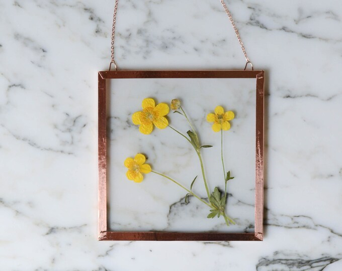 "Flower of the Month - May 2021 | Real pressed flower wall hanging | buttercup | 4"" square glass with copper edging"