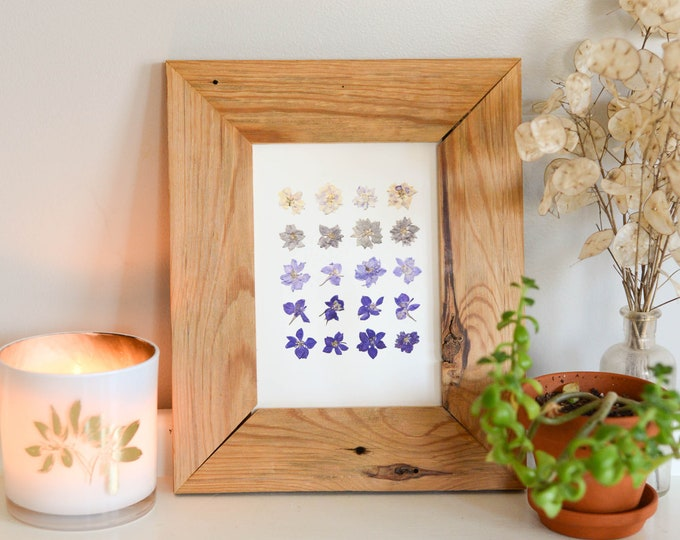 Larkspur Ombre | Print artwork of pressed flowers | 100% cotton rag paper | Birth month flowers, Botanical artwork