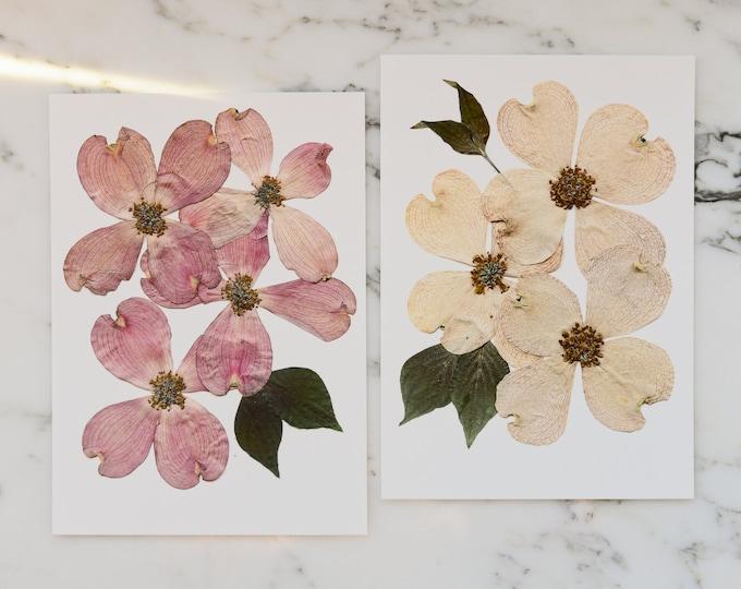 Set of Two | Flowering Dogwood, VA , NC State Flower | Print reproduction artwork of pressed flowers | 100% cotton rag paper | Botanical