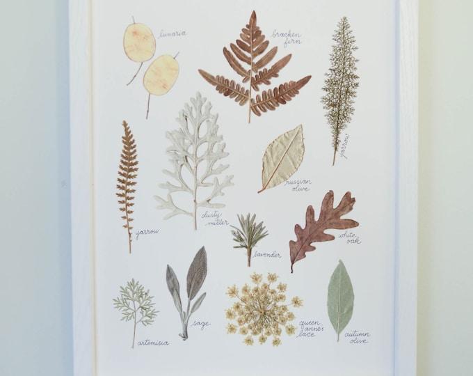 December Dusk | Print artwork of pressed winter plants | 100% cotton rag paper | Botanical artwork