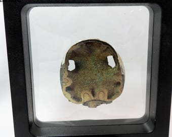 Pyrite Ammonite from Russia S21 Cross section 1.6 inches 26 grams polished face  Lapidary display