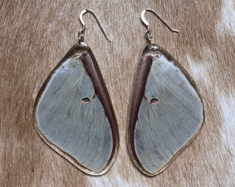 Resin Luna Moth Wings, Butterfly Earrings, Biology Gift, Entomology, Lepidoptera, Insect Art, Nature Jewelry, Cottage Core, Specimen Jewelry