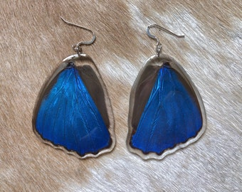 Resin Blue Morpho Wings, Butterfly Earrings, Entomology, Lepidoptera, Insect Art, Nature Jewelry, Cottage Core, Specimen Jewelry