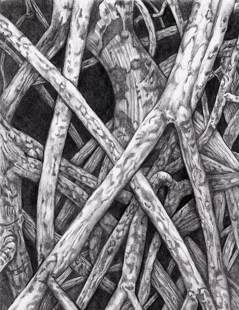 Manglar dibujo de Rosendahl amanecer dibujo a lápiz  3403296b824