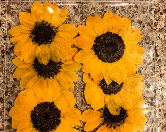 Yellow dried flowers etsy 6 dried sunflowers pressed sunflowers pressed yellow flowers large yellow flower pressed flowers dried flowers dark yellow craft flowers mightylinksfo